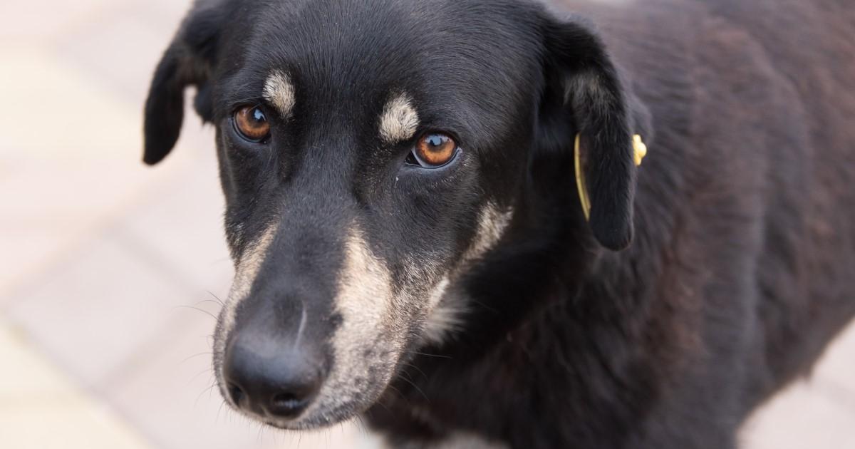 Stoppt illegalen Hunde Handel
